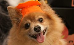 Best Halloween Costumes Dogs
