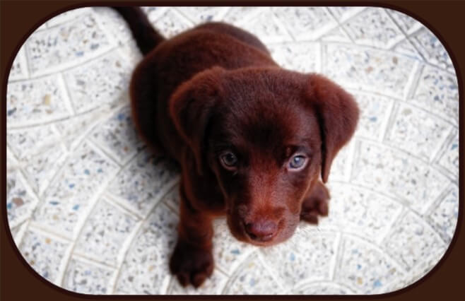 Potty Training Tips for Puppies