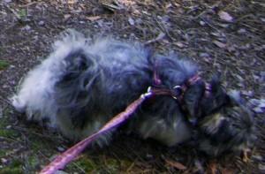 Train Dog to Walk on a Leash