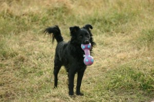 different types of dog toys