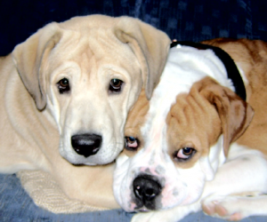 Two of my dogs - Jade & Argon -both heavy chewers