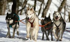 Best Books on Dog Training