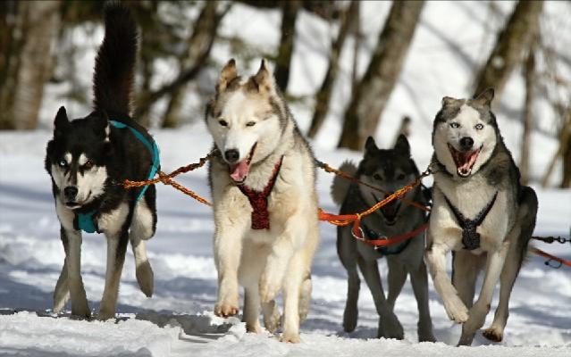 Best Dog Training Books Reviews