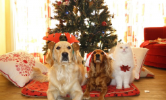 Top 10 Christmas Gift Ideas for Dogs and Dog Lovers
