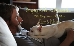 Keep Calm with Your Dog