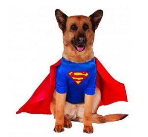 big-dog-superman-costume