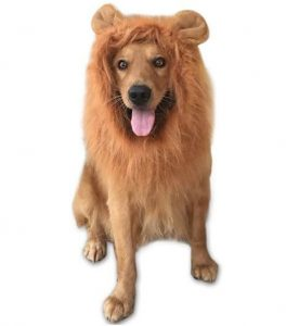 lion-mane-costume-for-dogs-dog-lion-wig-brown