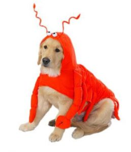 lobster-halloween-costume-for-large-dogs