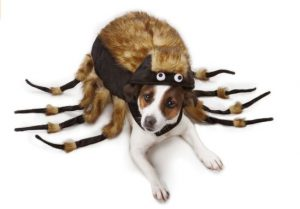 tarantula-spider-costume-for-dogs