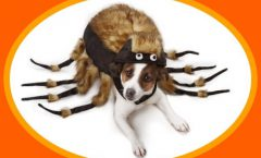 dog-costumes-large-dogs-spider-halloween-costume