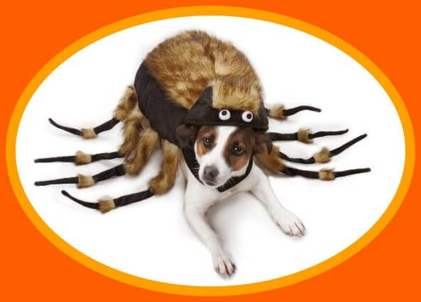 dog costumes large dogs spider halloween costume
