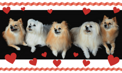 small dog breeds that do not shed