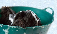 Thinking of Grooming Your Dog at Home? 7 Essential Dog Grooming Tools to Get The Job Done