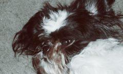 Dog Hair Detangler - The Stuff Detangling Spray Review