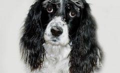 Grooming Tips choosing dog shampoo