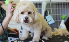Best Dog Grooming Clippers - Do Andis Dog Clippers Make the Cut?