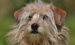 Matted Dog Hair Removal - What You Can Do to Prevent & Remove Mats from Fur