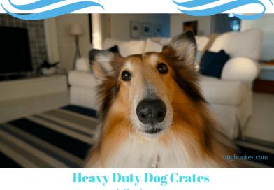 Heavy Duty Dog Crates Gelinzon Review