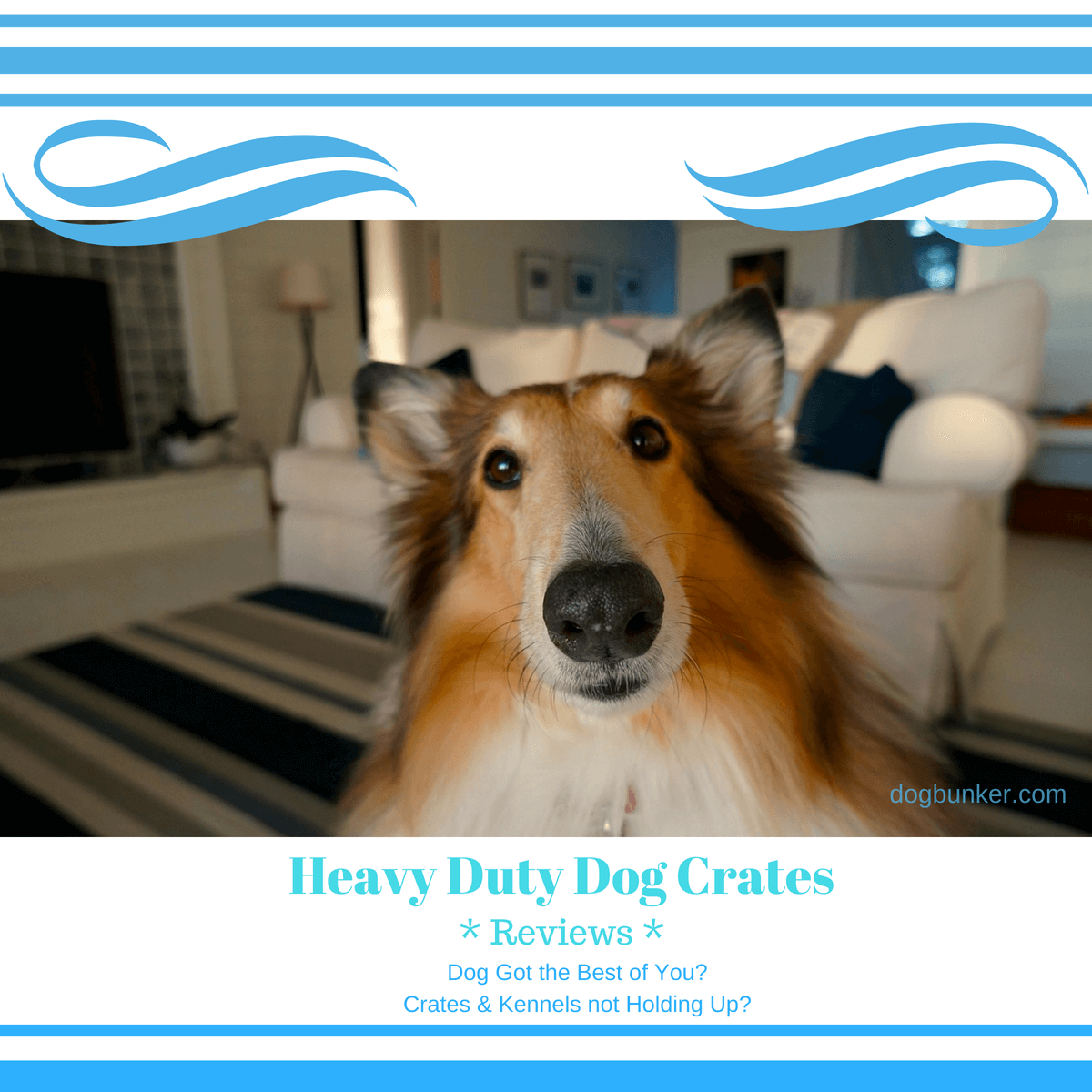 Heavy Duty Dog Crates Gelinzon Review