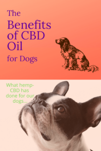 Is CBD Oil for Dogs? Benefits of Hemp Derived CBD Oil for Dogs