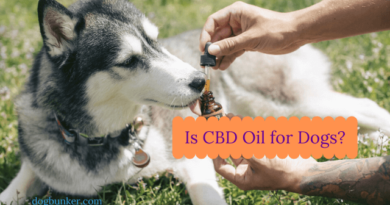 Is CBD Oil for dogs - giving hemp derived cbd oil to our dogs